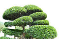 Japanese bonsai Stock Images