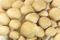 Japanese brown beech mushrooms buna shimeji background Stock Images