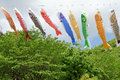 Japanese carp kite streamer decoration on the children s day Stock Photography