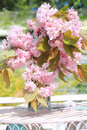 Japanese cherry blossom in the vase in the garden Royalty Free Stock Photo