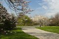 Japanese cherry blossoms path of in a garden Stock Image