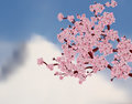 Japanese cherry tree. Sakura. Branch with pink flowers on a background of mountains. illustration