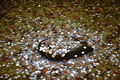 Japanese coins on the rock under the water Royalty Free Stock Photo