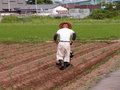 Japanese farmer Royalty Free Stock Photo