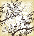 Japanese floral background Royalty Free Stock Photography