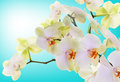 Japanese flower orchid beauty flora floral card Stock Photos