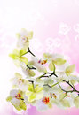 Japanese flower orchid beauty floral card Royalty Free Stock Image