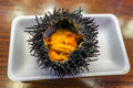 Japanese Food: Fresh sea urchin (uni) from the local market in J Royalty Free Stock Photo