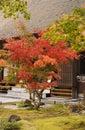 Japanese garden Stock Images