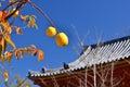 Japanese garden in Autumn, Kyoto Japan. Royalty Free Stock Photo