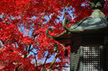 Japanese garden in Autumn, red leaves. Kyoto Japan. Royalty Free Stock Photo