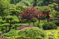 Japanese garden beautiful manicured with mature maple trees ornamental trees and junipers Stock Photography