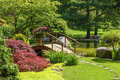 Japanese garden beautiful manicured with mature maple trees surrounding a pond with two wooden arched bridges and a Royalty Free Stock Images