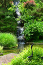 Japanese garden beautiful manicured with mature maple trees surrounding a waterfall and pond Stock Images