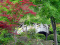 Japanese Garden Bridge Royalty Free Stock Photo