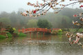 Japanese garden misty morning in toowoomba queensland australia Royalty Free Stock Image