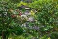 Japanese Garden Pagoda Royalty Free Stock Photo