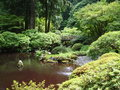 Japanese garden. Portland OR. Royalty Free Stock Photo