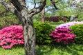 Japanese Garden Scene