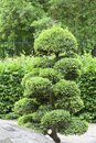 Japanese Garden in summer, exotic plants, Wroclaw, Poland Royalty Free Stock Photo
