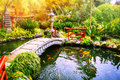 Japanese garden with swimming koi fishes in pond Royalty Free Stock Photo