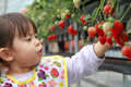 Japanese girl picking strawberry Royalty Free Stock Photo
