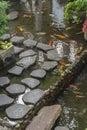 Japanese Koi Carp in a pond of Japanese garden Royalty Free Stock Photo