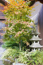 Japanese Maple Tree with Stone Pagoda Lantern Stock Photos