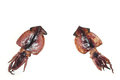 Japanese one night dried squid in the white #3 Royalty Free Stock Photo