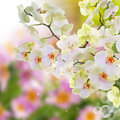 Japanese orchid beauty blooming flowers flora background Royalty Free Stock Images