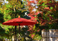 Japanese parasol and autumn leaves, Japan. Royalty Free Stock Photo