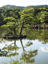 Japanese pond with pine trees Royalty Free Stock Photo