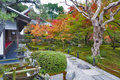 Japanese red maple tree during autumn in garden at Enkoji temple in Kyoto, Japan Royalty Free Stock Photo