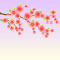 Japanese Sakura Cherry Tree Stock Photos