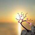 Japanese Sakura. Tree pink cherry on the stone. Against the backdrop of a beautiful sunset. illustration