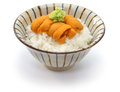 Japanese sea urchin roe on rice Royalty Free Stock Photo