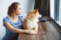 Japanese Shiba Inu dog near a window