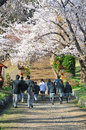 Japanese students with japan cheery blosoom high school in their uniform walking to pagoda among blossom Stock Photos