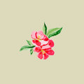 Japanese style. Botanical watercolor illustration of Red quince flower in blossom on olive background with