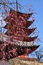 Japanese traditional architecture pagoda temple red by cherry blossom miyajima japan Royalty Free Stock Photography