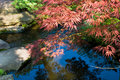 Japanese traditional garden in Kyoto Royalty Free Stock Photography