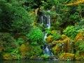 Japanese Zen Lake, Botanical Garden, Feng Shuei Royalty Free Stock Photo