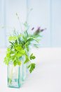 Jars of fresh herbs Stock Images
