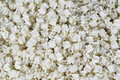 The jasmine for create thai garland at street market Royalty Free Stock Photo