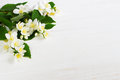Jasmine flower on wooden table. Greeting card. Royalty Free Stock Photo