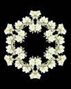 Jasmine Flowers Kaleidoscope -...