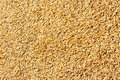 Jasmine rice seed texture Stock Images
