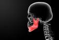 Jaw bone Royalty Free Stock Photo