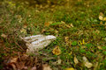 Jaw bone in wilderness Royalty Free Stock Photo