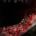 Jaws Royalty Free Stock Photo